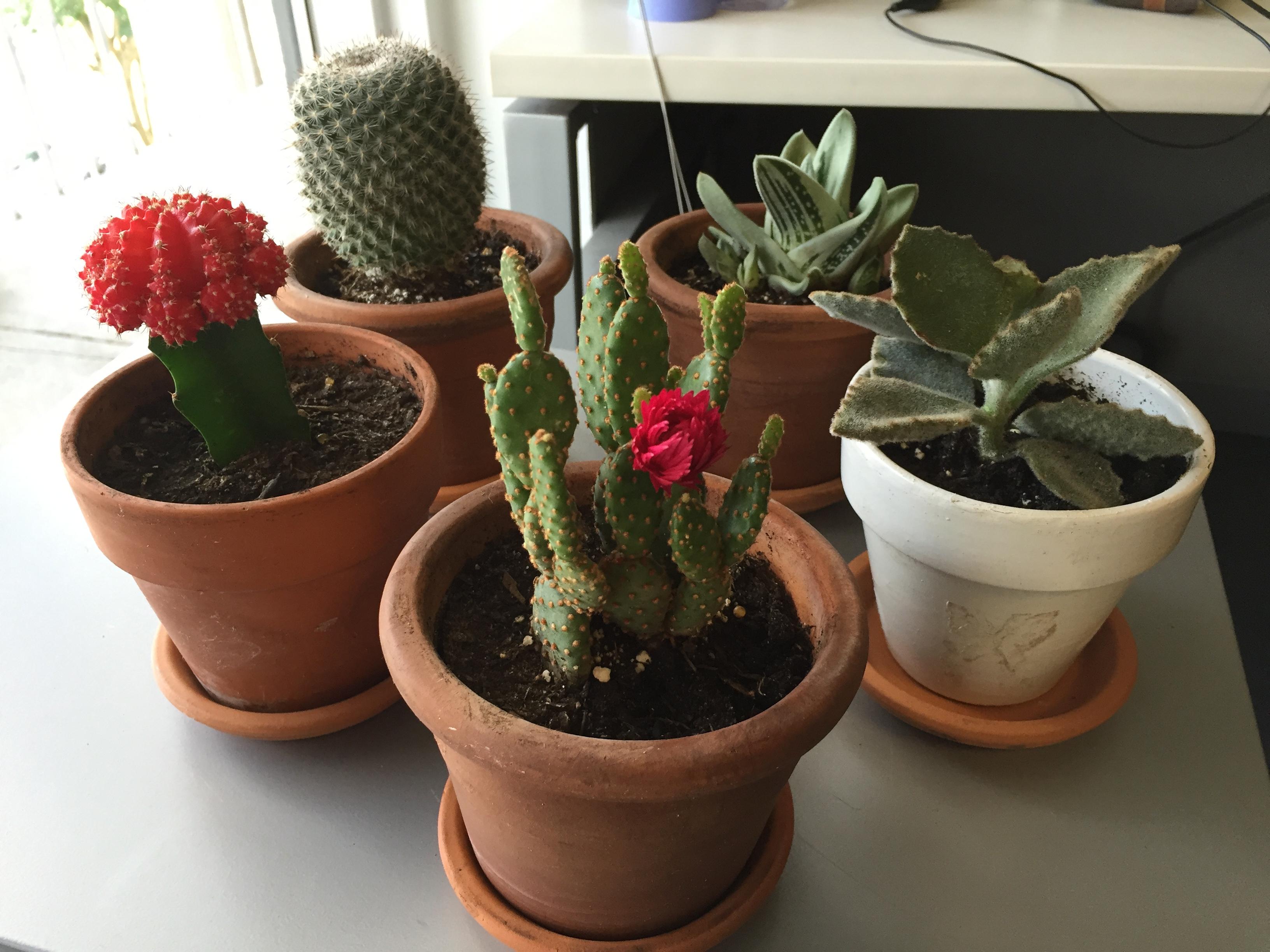 Cacti Council (literally)